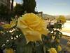 Ronda 32 Jardín de Casa de Don Bosco (ferlomu) Tags: ferlomu flor flower málaga ronda rosa