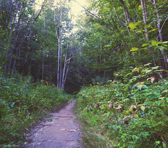 Forest Walk. (Sparkle_Photography) Tags: vermont vermontphotography vermontlife hike walk trail woods forest greenmountains flower flowers summer august fujifilm tree trees
