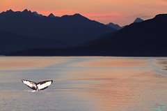 Alaska Dreaming (die Augen) Tags: alaska mountains whale tail sunset water canon sl2