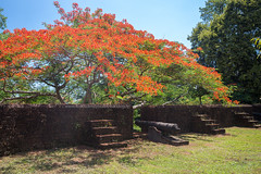 Chanthaburi Ancient Fortress (Khai Noen Wong) (baddoguy) Tags: ancient civilization beauty in nature blossom blue cannon city gate cloud sky color image community famous place fighting flower fort fortified wall full green history horizontal human settlement bloom ladder landscape local landmark national no people old town outdoors peacock photography pride barbados public park red rural scene scenics springtime stone material summer thailand the past tourism travel destinations tree tropical climate unusual angle war weapon