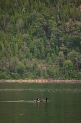 2018-08-18_01-29-13 (Carolina Fallo) Tags: nature naturaleza duck patos lake lago green landscape verde mountain montaña animals animales