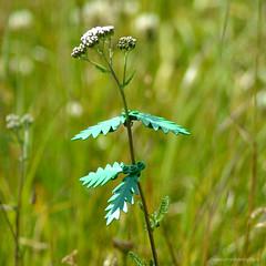 LEGO Green 06 (PatrickBaroni MYSTYLE-MYLIFE) Tags: lego green legogreen madefromplants