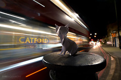 Origami Cat near Catford Stations (Luke Agbaimoni (last rounds)) Tags: london transportforlondon bus cats cat night streetphotography origami