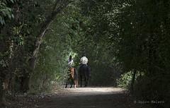 AMUNT (Quico Melero) Tags: lliçàdamunt vallèsoriental caballos horses catalunya cataluña catalonia valldeltenes riu rio river cavalls