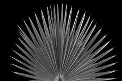 Plant Art (DJ Wolfman) Tags: blackandwhite bw art photoart black white plants contrast olympus olympusomd 12100mmf4zuiko zuiko zd micro43