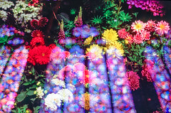 The Life of a Garden (Hayden_Williams) Tags: doubleexposure multipleexposure filmphotographydoubleexposure filmdoubleexposure surreal dream dreamy magic magical heaven heavenly ethereal stainedglass church