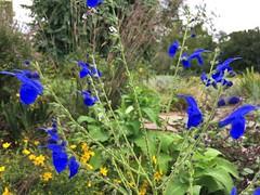 Cylburn Arboretum ~ vibrant eye candy (karma (Karen)) Tags: baltimore maryland cylburnarboretum parks gardens flowers dof bokeh hbw iphone cmwd
