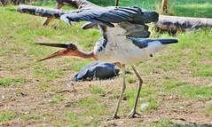 Bird (Hugo von Schreck) Tags: bird vogel hugovonschreck canoneos5dsr tamron28300mmf3563divcpzda010