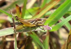 IMG_6196 (mohandep) Tags: hessarghatta lakes karnataka butterflies birding nature wildlife insects signs food