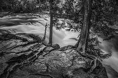 Roots n Rock (Thomas Pohlig) Tags: glacier glaciernationalpark water stream creek mcdonaldcreek montana rocks trees longexposure blackandwhite blackandwhitephotography monochrome mono