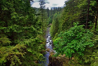 South Fork Snoqualmie River Flow Through a Forested Valley (Olallie State Park)