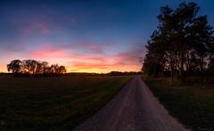 Next to a nearby pond (Eifeltopia) Tags: feldweg sunset sonnenuntergang südeifel wiese rheinlandpfalz panoramicshot trees pines naturschutzgebiet road dawn dämmerung