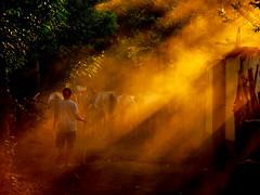 Into the light (3dgor 加農炮) Tags: shepherd lightbeam village indonesia sunset