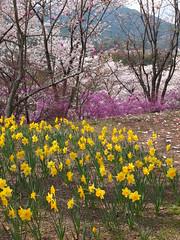 a (14) (hiromi89) Tags: japan beauty beautiful scenery flower wood pond