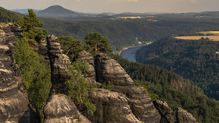 kleiner Felsenwald - small forest growing on rocks