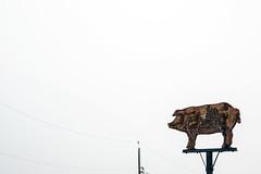 Butcher Shop (Mister Day) Tags: pig butcher shop sign minimal hog