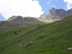 Rando 2018 (202) (Mark Konick) Tags: alpen alpes alpi alps backpacking bergsee bergtour bergwandern bivouac gebirge hiking lac lago lake markkonick montagnes mountains nathaliedeligeon randonnée trekking wandern italy italie italia italien france francia frankreich bouquetin ibex cabramontés stambecco steinbock chamois camoscio gamuza rebeco gams gämse gemse gämsbock gemsbock moutons sheep vaches vacas kühe mucche vacche cows cascade chuted'eau waterfall wasserfall cascata cascada saltodeagua