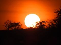 9964ex  Sunset -- Lake Nakuru  **Explore** (jjjj56cp) Tags: endofday lakenakuru kenya africa safari africansafari silhouette treeline contrast orange plains grasslands p900 jennypansing sun bright vivid colorful explore explored