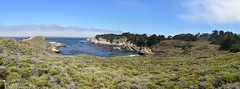 Point Lobos State Reserve (nick.amoscato) Tags: ca california pointlobos lobos reserve bigsur