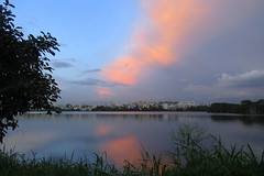 IMG_4985 (mohandep) Tags: madivala lakes bangalore wildlife scenery sun flowers insects birding buses