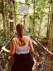 Canopy Taman Negara (baptistedavid1) Tags: tree arbre green vert iphone8 iphone tropical canopywalkway walk canopée canopy foret jungle nationalpark tamannegara malaisie
