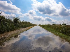 High Road (fannymejean) Tags: rain flaque pluie nuage reflection reflet france camargue