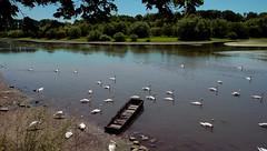 Schwanensee in Münchhausen (Munchhausen, Elsass) (MHikeBike) Tags: see landschaft abend sunset farbig himmel büsche wald rheinebene rhein lake landscape eve coloured sky shrubbery forest rhine fähre schiff elsass alsac frankreich france