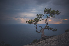 The Steadfast on the Slope 1 (Taema) Tags: crimea pine sea