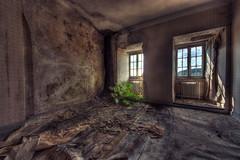 Farn Farn Farn.... (JOP-76) Tags: verlassen sanatorium kaput farn abandoned exploration urbex lost