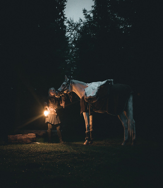 Late night in the forest