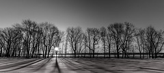 ile 2018-130 (Tasmanian58) Tags: sunrise orleans island ile quebec canada winter morning snow trees bw nb blackwhite noirblanc landscape sun light sony a7ii batis zeiss 2818mm
