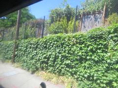 IMG_8295 (Andy E. Nystrom) Tags: bellevue washington wa bellevuewashington