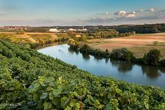 Weinberg am Neckar (mariomüller1) Tags: natur landschaft landscap badenwürttemberg deutschland wein weinberg neckar flus farbe sommer abendstunde