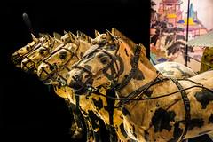 The Terracotta Army (Tony Shertila) Tags: 210–209bce england gbr liverpool qinshihuang unitedkingdom worldmuseum britain chinasfirstemperor europe exhibition geo:lat=5341003312 geo:lon=298177434 geotagged merseyside museum pottery statue terracottaarmy terracottawarriors ©2018tonysherratt 20180905133442liverpoolmuseumterracottaarmylr