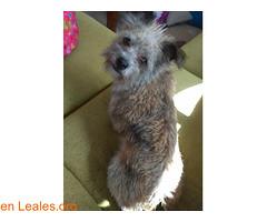 PERDIDA EN AGAETE!! (Leales.org • tu guía animable) Tags: adopta adoptar adoptanocompres noalmaltratoanimal adopción sebusca extraviado perdido perro gatos lealesorg