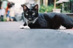 CNV000031 (雅布 重) Tags: taipei nikon f100 nikkor 50mm f14d agfa vista 200 film taiwan 2018 street cat