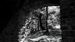 Burgruine Neue Isenburg (frankdorgathen) Tags: sony sonyrx10m3 sonyrx10iii monochrome blackandwhite schwarzweiss schwarzweis stein brick stone wand wall baum tree castleruin ruin ruine ruhrpott ruhrgebiet essen neueisenburg