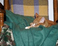 Comfy chair (baalands) Tags: crissy feline gato cat chair blanket