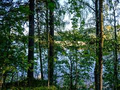03092018-DSCF1015-Redigera-2 (Ringela) Tags: österdalälven leksands rastplats september 2018 sweden river nature tree fujifilm xt1
