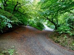 Fork in the Track, Blaen Bran Brook, Upper Cwmbran 17 September 2018 (Cold War Warrior) Tags: blaenbran brook ford track autumn cwmbran