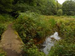 DSCN5583 (norwin_galdiar) Tags: bretagne brittany breizh finistere monts darrée nature landscape paysage
