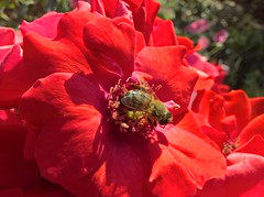WP_20180817_09_54_31_Raw (vale 83) Tags: bee microsoft lumia 550