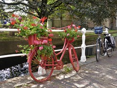 Delft, no bike parking ... (Alta alatis patent) Tags: bikes delft flowers hotel emauspoort red