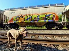 #minneapolisgraffiti #graffiti #art #streetart #midwestgraffiti #coupe #couper #pitbull #trackside (kadillak king) Tags: minneapolisgraffiti streetart midwestgraffiti pitbull art couper graffiti trackside coupe