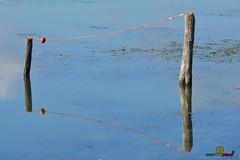A-LUR_7243 (OrNeSsInA) Tags: trasimeno umbria italia toscana lago nature tuscany rettile