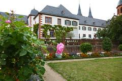 Monastery Garden (ivlys) Tags: seligenstadt main fluss river einhardsbasilika klostergarten monasterygarden rose pflanze plant natur nature ivlys