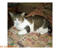 PERDIDO EN LOS LLANOS ( VECINDARIO)? (Leales.org • tu guía animable) Tags: adopta adoptar adoptanocompres noalmaltratoanimal adopción sebusca extraviado perdido perro gatos lealesorg