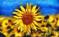 Façon Van Gogh... (Diegojack) Tags: vaud suisse echandens d500 nikon nikonpassion plantes fleurs tournesols création peinture numérique vangogh look