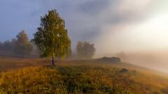 Осенние грёзы #maksileni, #Максименко_Леонид, #Leonid_Maksimenko, #своифото, #пейзаж, #природа, #утро, #рассвет, #дерево, #натура, #восход, #sunrise, #nature, #tree, #Landscape, #sun, #туман, #лучи, #foggy, #природа, #небо, #небоголубое, #сониальфа, #сони (ЛеонидМаксименко) Tags: сониа6000 maksileni leonidmaksimenko natgeoru foggy nature небо природа натура дерево etonashural sun рассвет своифото sunrise natgeorussia сониальфа пейзаж восход sonyalpha небоголубое утро sonya6000 лучи tree landscape natgeoyourshot туман максименколеонид