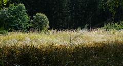 180825_Harz_151 (Rainer Spath) Tags: deutschland germany allemagne sachsenanhalt saxonyanhalt harz brocken wernigerode schierke dreiannenhohne